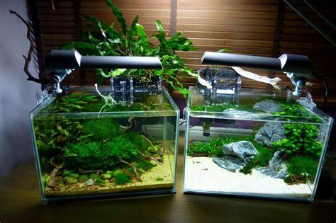 How To Aquascape A Planted Tank by The Planted Aquarium Store Workshop Nano Tank Aquascaping