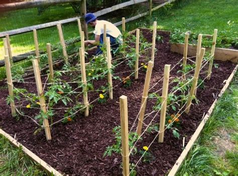 diy tomato support diy tomato cages how does your garden grow pinterest