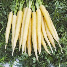 is a carrot a root vegetable 1000 images about carrots beets radish on