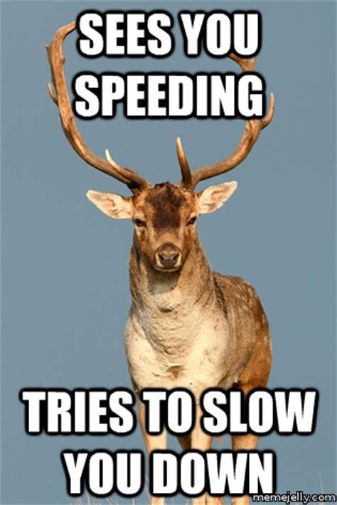 Deer Meme - pet deer memes