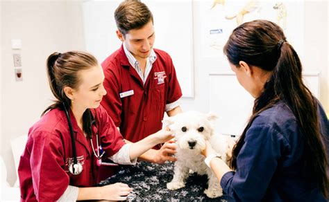8 Tips On How To Choose A Vet For Your Pet by 8 Tips For Choosing A Veterinary School