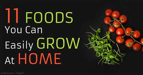 see how you can grow amazing vegetables in raised garden 230 best home garden specialized images on pinterest