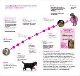 puppy weight chart template sle puppy growth chart 6 documents in pdf