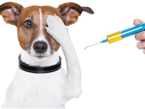 can i take my puppy outside before vaccinations k9aid resources