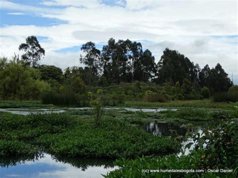 la conejera bogota 191 por qu 233 proteger el humedal la conejera fundaci 243 n