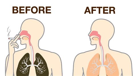 Ways To Detox Your From Nicotine by How To Naturally Detox Nicotine From Your Daily Vibes