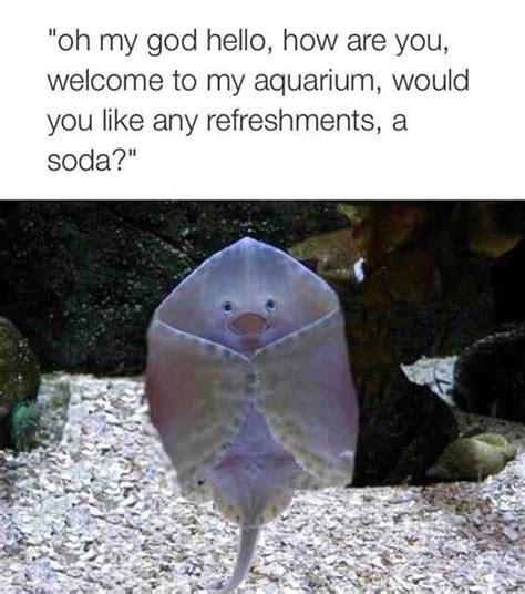 Stingray Meme - baby stingray welcomes you the meta picture