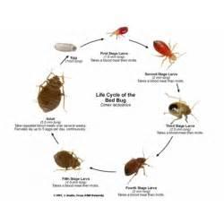 insectes piqueurs punaises de lit anticimex