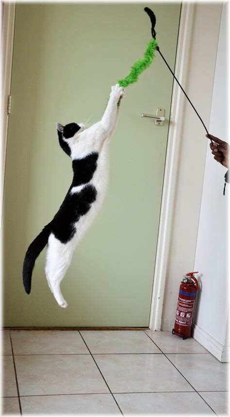 jumping cat   stock photo public domain pictures