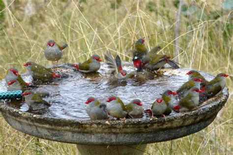 red bacteria in bathroom bath bullies bacteria and battlegrounds the secret world of bird baths
