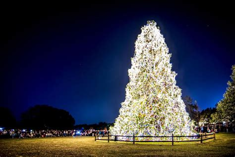 myrtle beach christmas tree farm hits in charleston columbia and myrtle charleston postandcourier