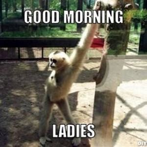Good Morning Sexy Memes - pics for gt sexy good morning meme