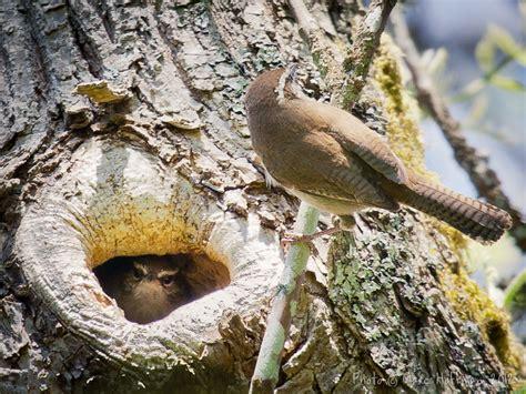 cavity nesting birds