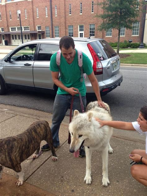 pet wolf i want one pet wolf animals wolves pets and guys