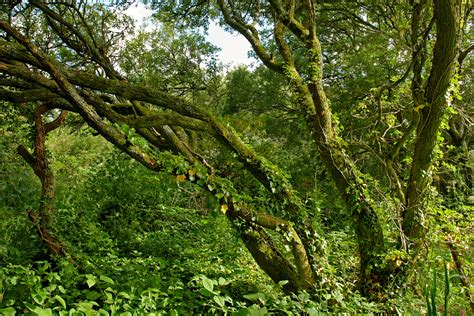 woodland trees madron well woodland trees and woodland photography by