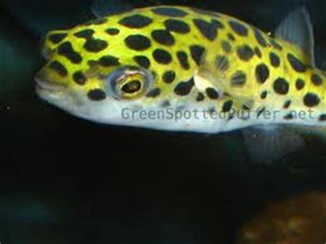 Daftar Harga Pakan Ikan Louhan pondok air sentra ikan hias dan lobster katalog ikan hias