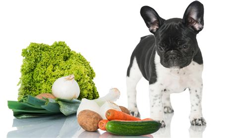 6 vegetables dogs can eat according to science