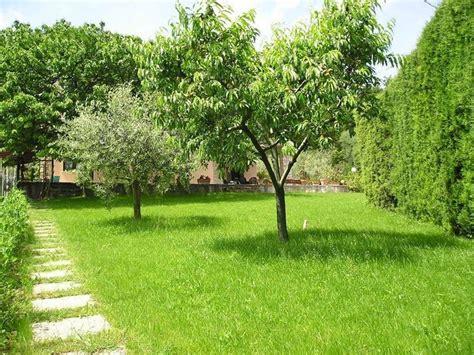 alberi sempreverdi da giardino alberi da ombra alberi scegliere gli alberi da ombra