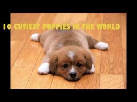 cutest puppies on earth cutest puppy on earth www pixshark images galleries with a bite