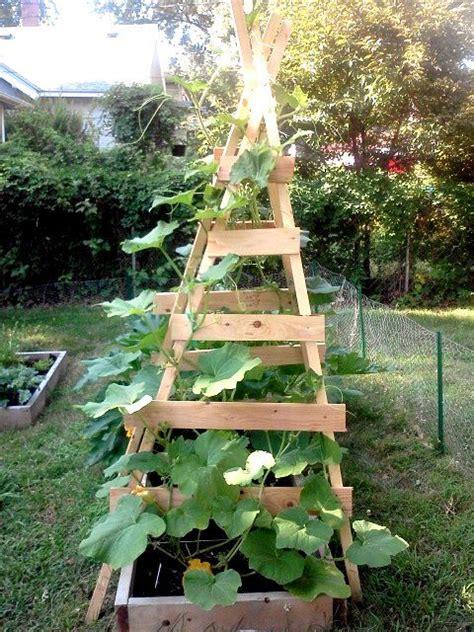 vertical zucchini trellis garden diy