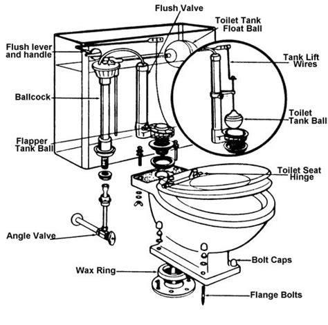 Anatomy Of A Bathtub Drain by Cross Sectional View Of Toilet Bowl Search