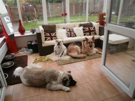 puppy room 17 best ideas about kennel flooring on small house outdoor