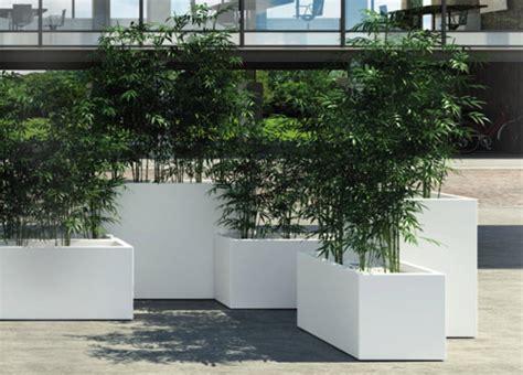 vaso pianta pianta da esterno in vaso con cubi per le piante fuori e