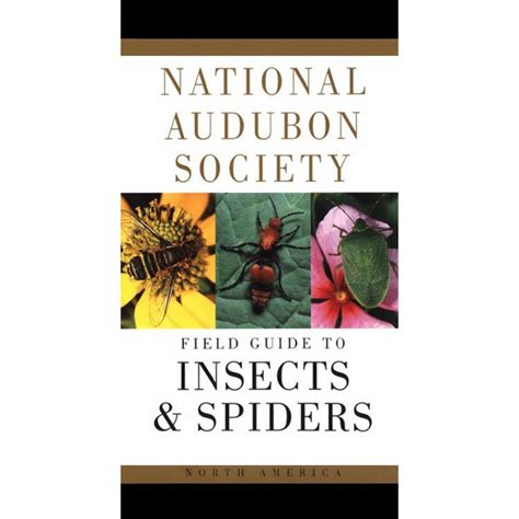 insects and spiders national audubon society field guide