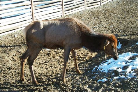 u weight loss deer horses may hold a solution to slowing spread of fatal