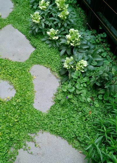 ground force 10 top ground covers for your garden