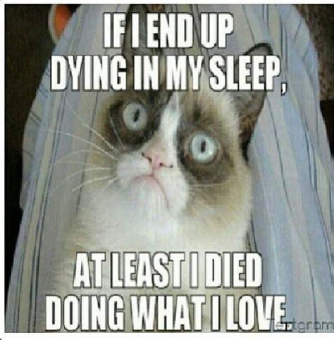 Grumpy Cat Sleep Meme - 25 best sleepy grumpy cat images on pinterest cat