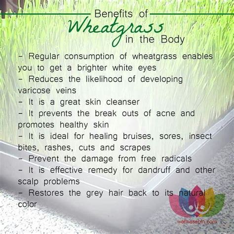 Wheatgrass Detox Diet Plan by 27 Best Wheatgrass Images On Health Cleanse