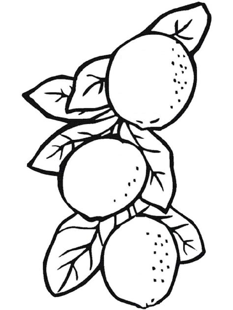 lemon tree coloring page lemon fruit coloring pages sketch coloring page