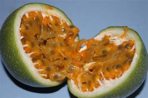 passiflora coltivazione in vaso la passiflora e la sua coltivazione cure naturali it