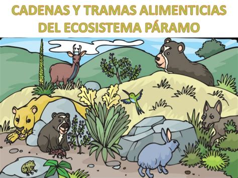 las cadenas migratorias definicion los seres vivos fuente de nutrientes 2