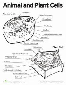 animal and plant cells plant cell life and life