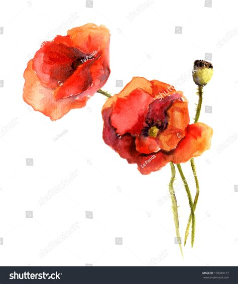 watercolor poppy flowers stock illustration 139049177