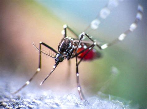 tantallon announcements mosquito repellents that best protect against zika
