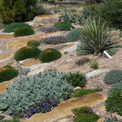 plants for a rock garden 34 best images about rock and succulent garden on