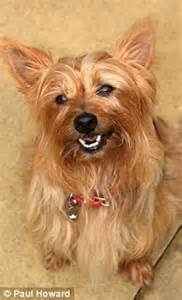 yorkie howling craig brown talking to dogs i don t predict a howling success daily mail