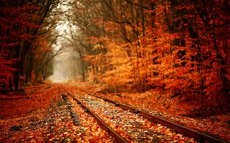autumn leaves 171 sarsrose