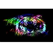 Colorful Tiger HD Wallpaper  Wallpapers