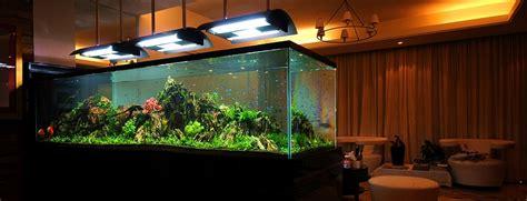 Aquascaping Materials Bubbles Aquarium Aquascapes Tank Setups Projects