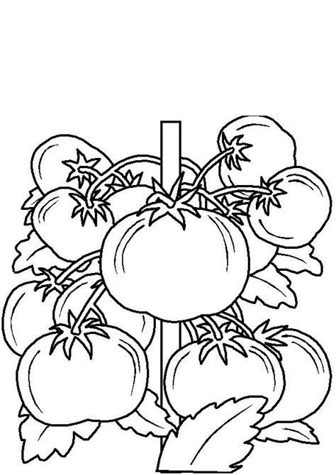 Coloriage le plant de tomate - Momes.net