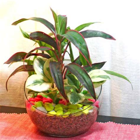 indoor plants singapore indoor plants for home or office table garden plants singapore
