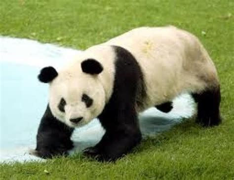 imagenes de animales no conocidos ranking de animales en peligro de extinci 243 n listas en