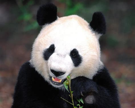 Search In China Search Results For Animals In China Calendar 2015