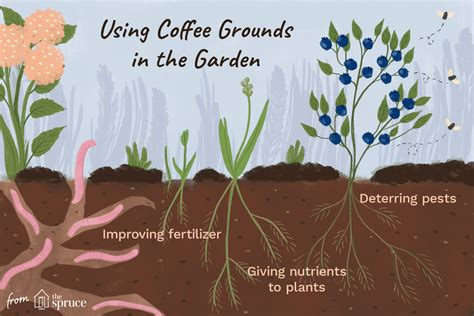 Coffee Grounds For Gardening by How To Use Coffee Grounds In Your Garden