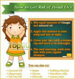 how to get rid of lice in your home how to get rid of lice top 10 home remedies
