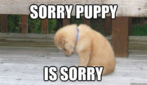 Sorry Meme - sorry puppy is sorry sorry puppy quickmeme